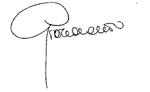 firma grazia